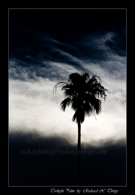 Twilight Palm — a palm tree in the dark