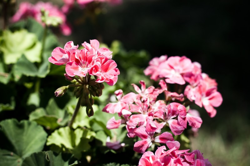 Photo: Vivid Pink