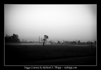 Foggy Country